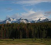 The mountains and forest of the Sawtooth National Recreation Area
